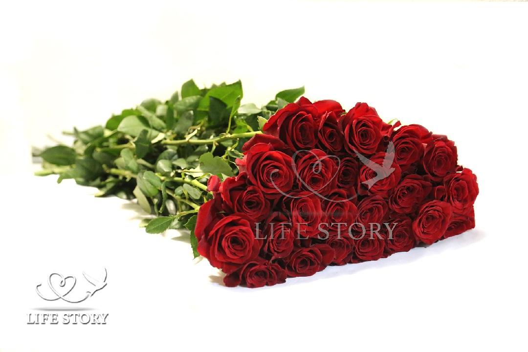 розы 180 см